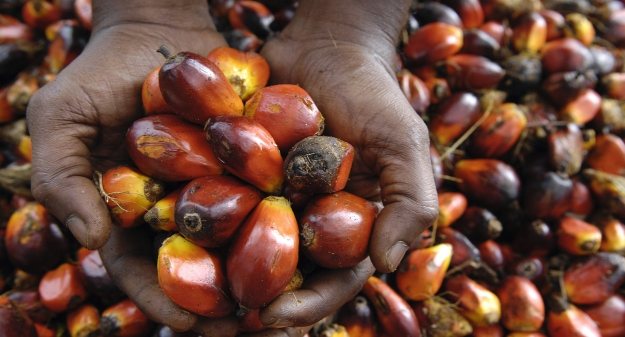 Hands Holding Palm Oil